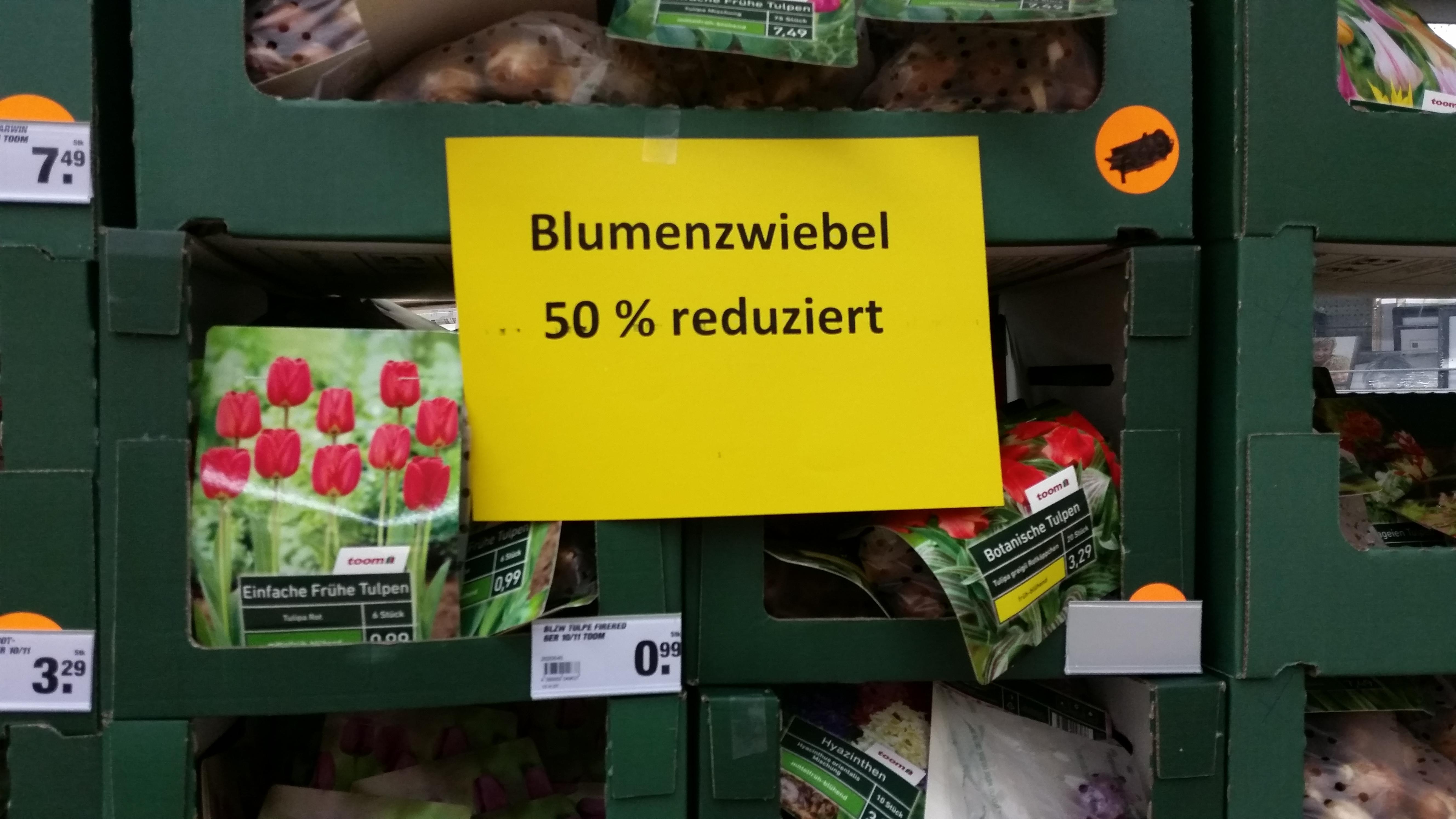 blumenzwiebel_reduziert